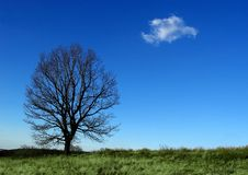 Free Tree And Cloud Royalty Free Stock Photo - 4528185