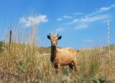 Free Goat On A Background Of A Hills Royalty Free Stock Photo - 4529725