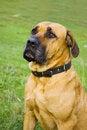 Free Dog Stock Images - 4531384
