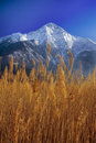 Free Lake With Reeds Royalty Free Stock Photography - 4536707