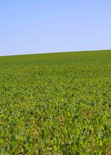 Free Green Grass Stock Image - 4531251