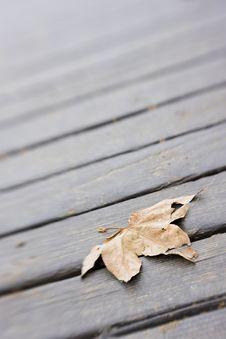 Free Leaf On Boardwalk Stock Image - 4531261