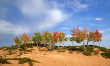 Trees In A Half Desert Area Royalty Free Stock Photo
