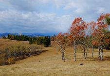 Free Red Leave Trees In Automn Stock Photos - 4533373