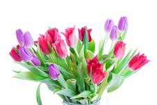 Free Spring Tulips Isolated On A White Stock Photos - 4535633