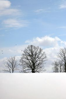 Free Tree Silhouette With Snow Stock Images - 4536844