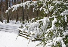 Snow Covered Tree And Fence Stock Photography