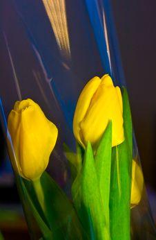 Free Yellow Tulips Royalty Free Stock Photo - 4537785