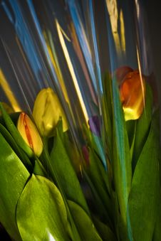 Free Tulips In Plastic Wrapping Stock Photos - 4537793