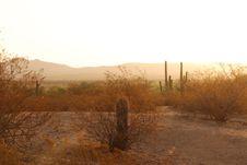 Free Sonoran Morning Royalty Free Stock Image - 4537896