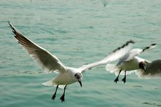 Free Seagull Stock Photo - 4538580