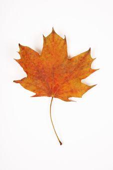 Free Yellow Leaf Stock Photos - 4539293