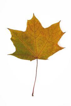 Free Leaf Stock Photos - 4539373
