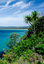 Free Tropical Vegetation Stock Image - 4547171