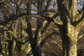Free Trees Background Royalty Free Stock Image - 4547566