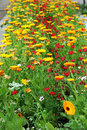 Free Flowerbed Stock Images - 4547834