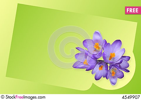 Free Crocus Royalty Free Stock Photography - 4549907