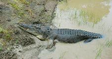Free Crocodile Stock Photo - 4540140