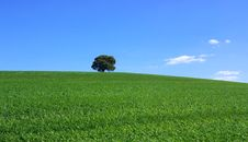 Free Isolated Tree In Field. Royalty Free Stock Photo - 4540455