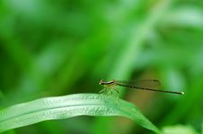 Free Damselfly Stock Photography - 4541302