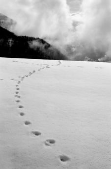 Free Snow Traces Royalty Free Stock Images - 4541569