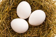 Free Three White Eggs In A Nest Royalty Free Stock Image - 4542226