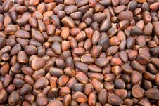 Free A Pile Of Cedar Nut Royalty Free Stock Photography - 4542597