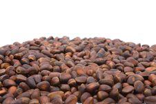 Free A Pile Of Cedar Nut Stock Photography - 4542602