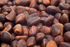 Free A Pile Of Cedar Nut Stock Image - 4542661