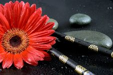 Free Gerbera Flower Stock Photo - 4543070