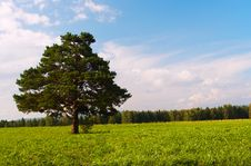Free Alone Tree In Field Royalty Free Stock Photography - 4543087