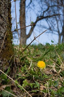 Free Dandelion Under Tree Royalty Free Stock Images - 4543089