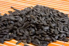 Close-up Of Sunflower Seed Royalty Free Stock Images