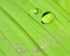 Free Water Droplets On A Green Leaf Royalty Free Stock Photos - 4543228