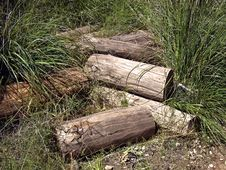 Free Wood Stock Image - 4543661
