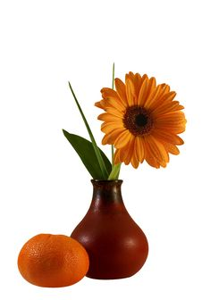 Floral Composition With Gerber And Tangerine Royalty Free Stock Photo