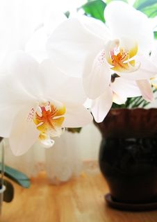 Free Orchid Stock Photo - 4544240