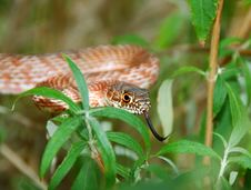 Free Garden Snake 3 Stock Photography - 4545252