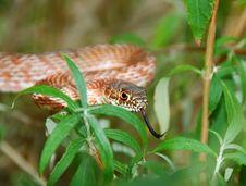 Free Garden Snake 3 Stock Photography - 4545252