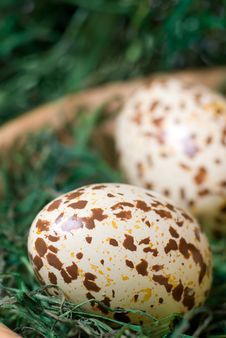 Free Easter Egg. Stock Photography - 4546382
