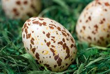Free Spotted Eggs. Royalty Free Stock Photos - 4546768