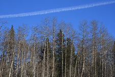 Free Forest Vapor Trail Royalty Free Stock Photography - 4547527