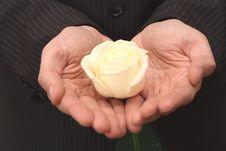 Free Rose Stock Image - 4548451