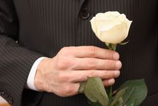 Rose  In Hand Stock Photography