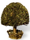 Free Bonsai Small Tree Stock Image - 4558341