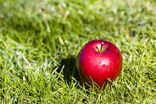 Free Apple In The Grass Royalty Free Stock Photos - 4550048