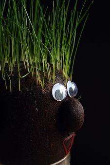 Free Grass On The Head Stock Image - 4550741