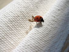 Lady Bug Stock Photos