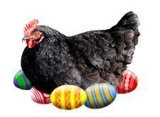 Free Easter Hen Royalty Free Stock Photo - 4551175