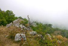 Free Hi-land Flora In The Fog Stock Photo - 4552720